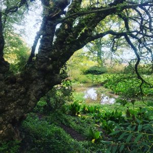 Devon-based artist - inspired by trees and nature in Devon